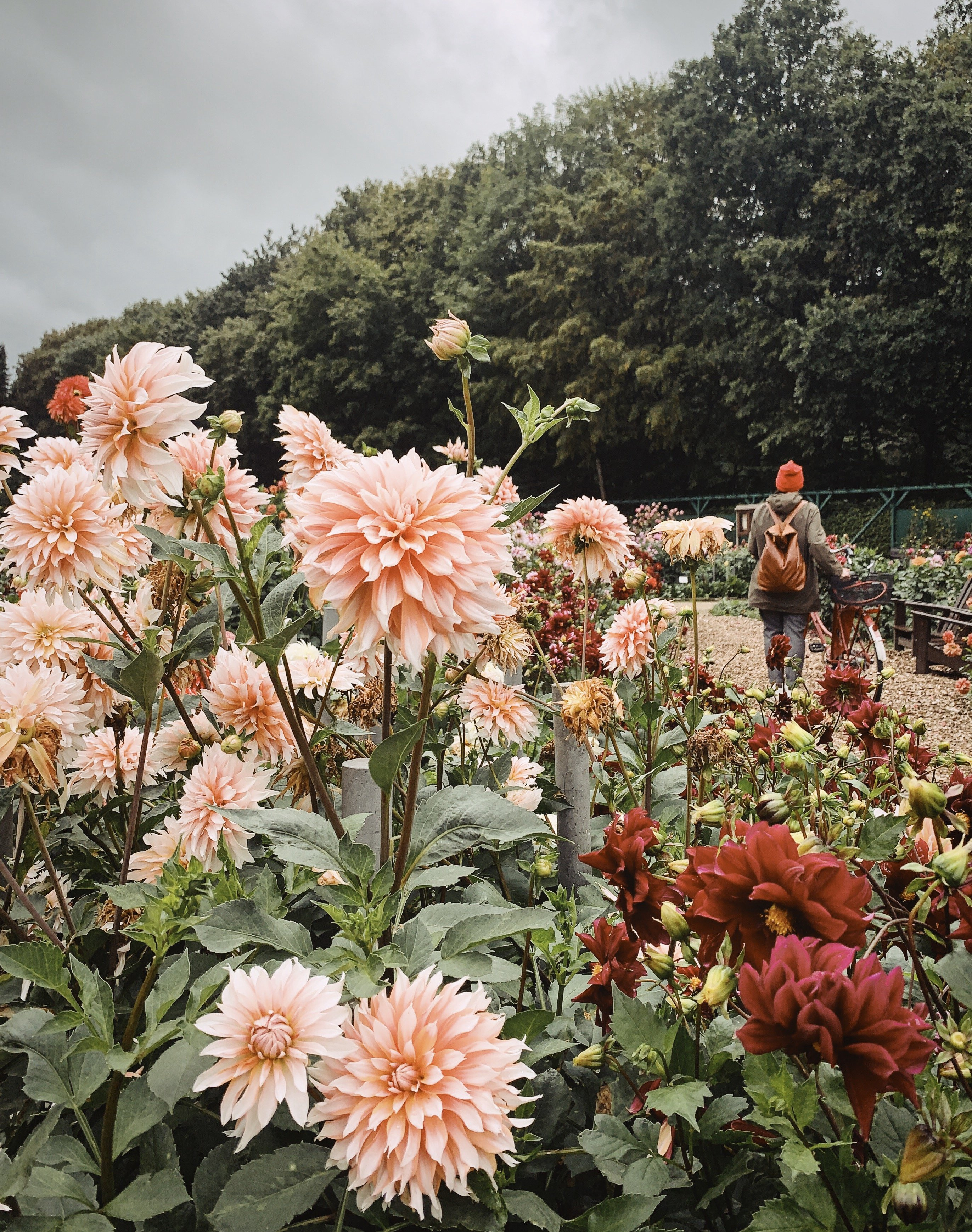 Hamburg Hotspot im Herbst: Dahliengarten am Volkspark