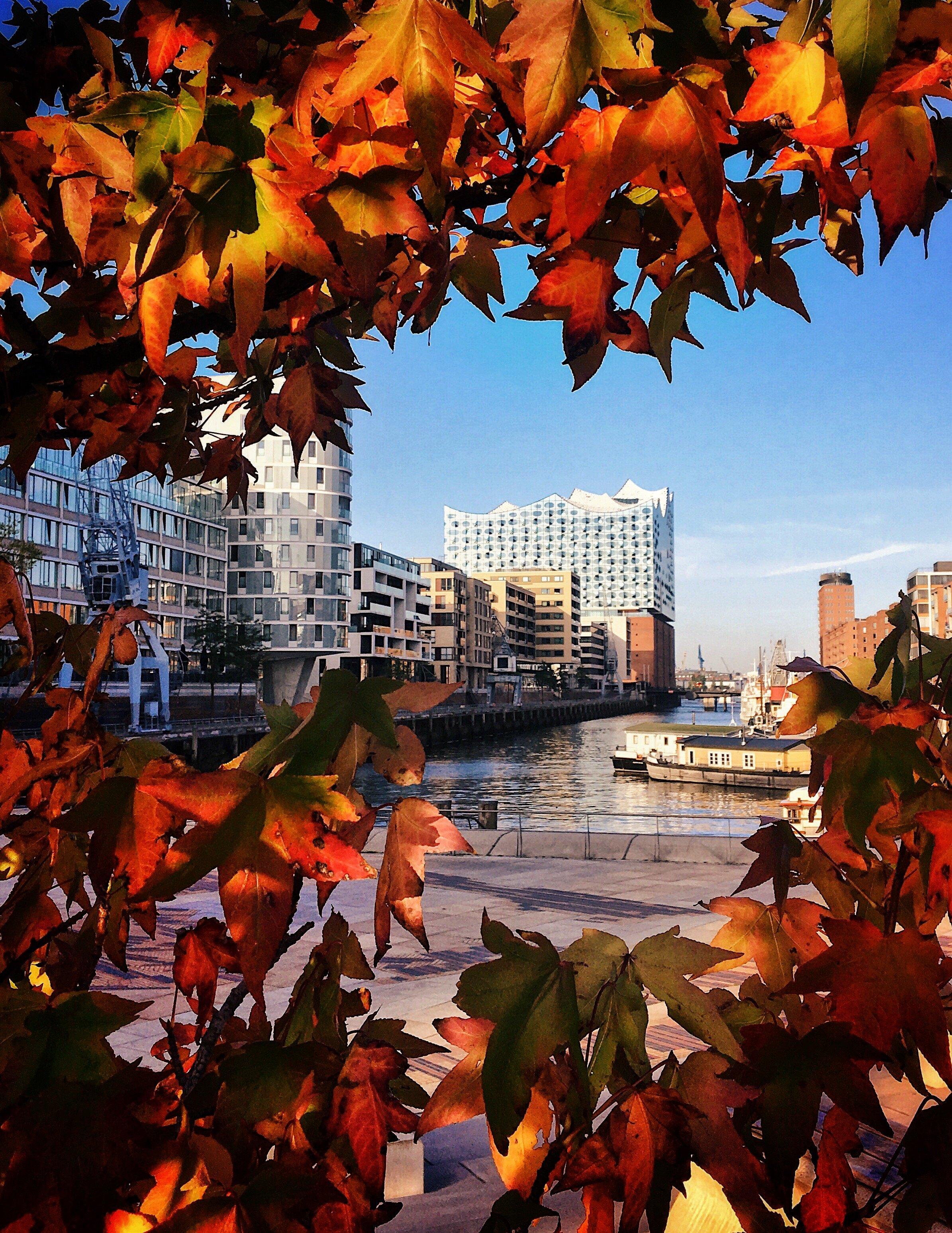 Sandtorhafen Hafencity Elbphilharmonie im Herbst